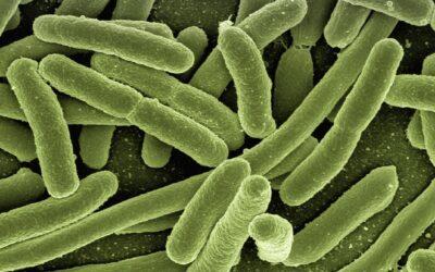 Educando para combatir la resistencia a los antibióticos